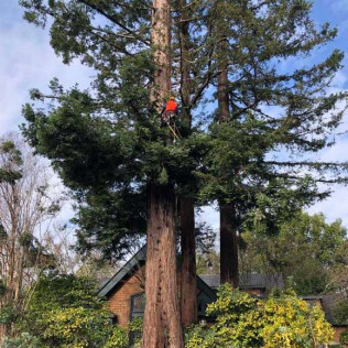 Fire Safety Pruning & Maintenance